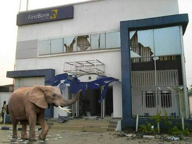 E-news:Mysterious Elephant Appears In First bank Nigeria-Lagos-swallows 120 million Naira live.